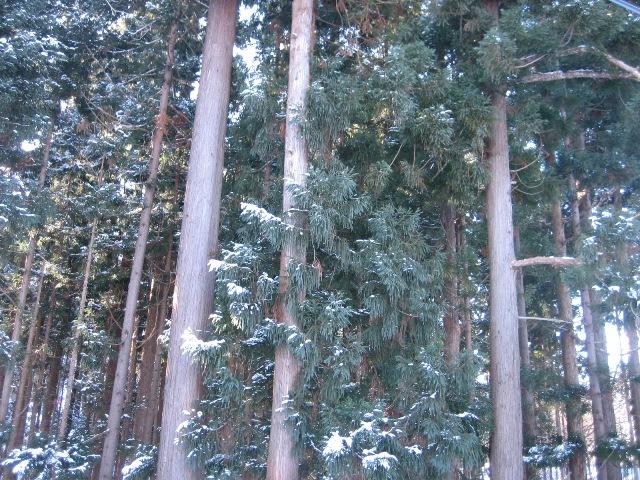冬の円山3