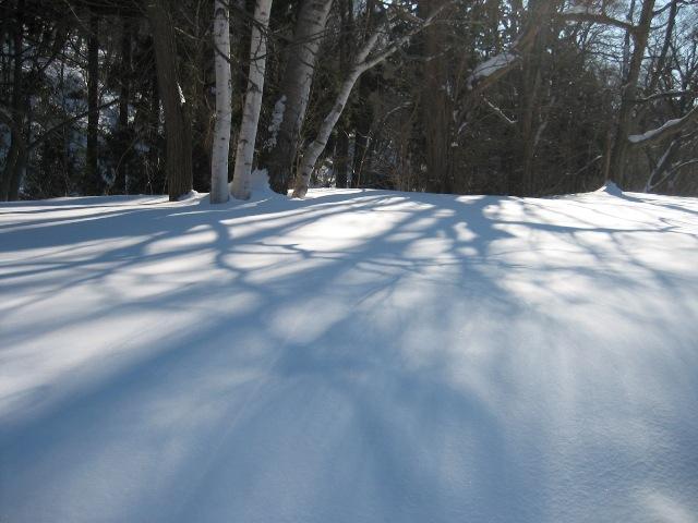 冬の円山6