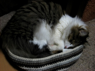 カウチンで寝る1