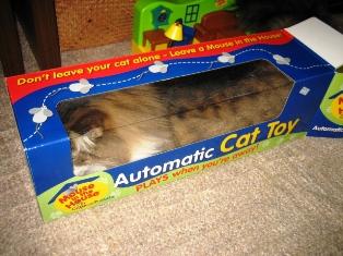 cat&toy1