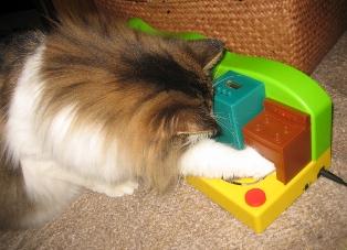 cat&toy4