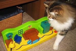 cat&toy5