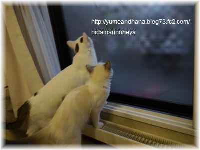 1_20120131212732.jpg