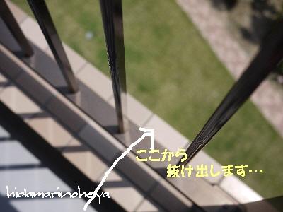 フェンスの隙間を抜ける