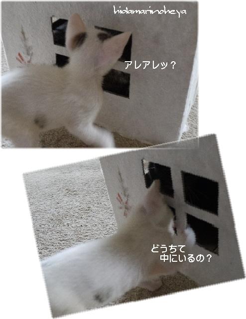 連結画像-どうして中にいるの?