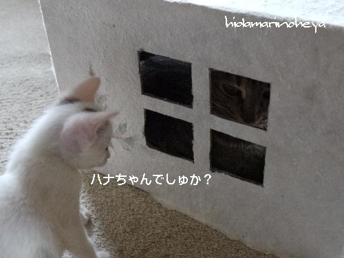 ハナちゃんでしゅか・