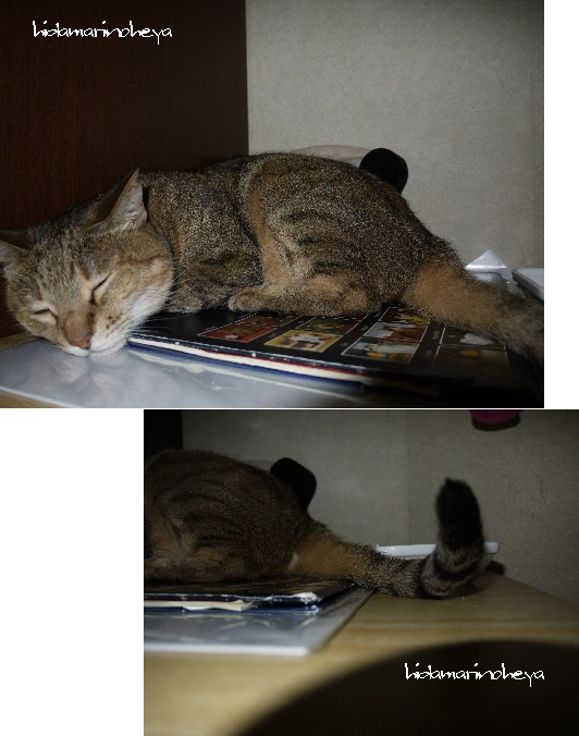 モカの寝顔110919