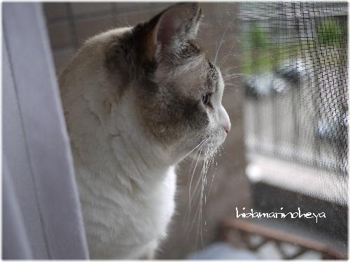 ミルクの好きな窓110922