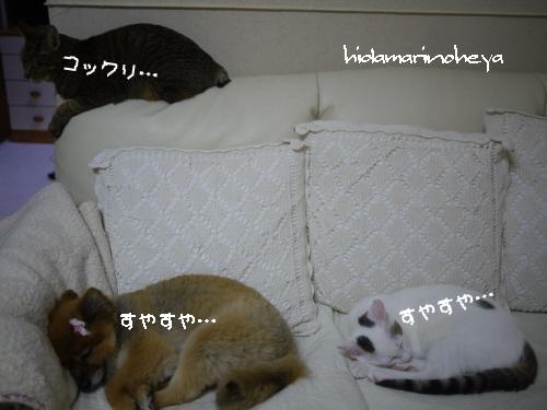みんなでおやすみ