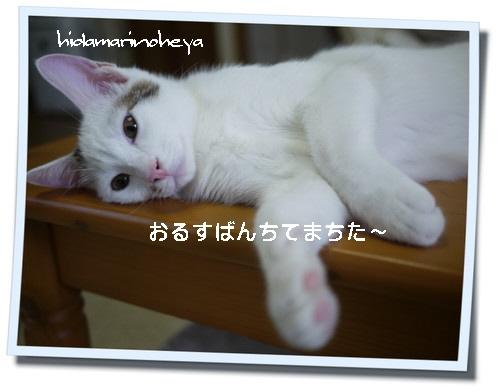 ココアkako-cESLfrr6RDGiPAEW