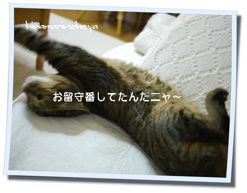 ハナkako-uAJq1YitAKXVgRma