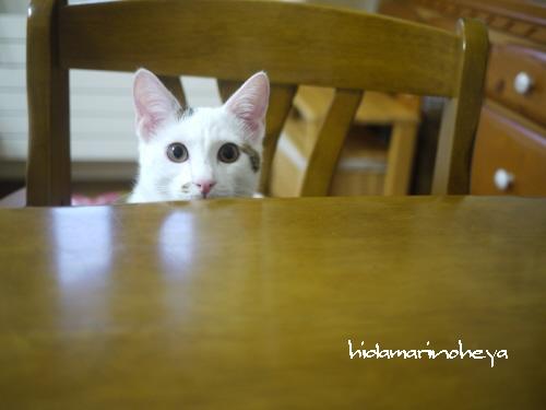 ココ…テーブルから…