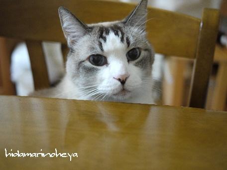 テーブルのミルク111129