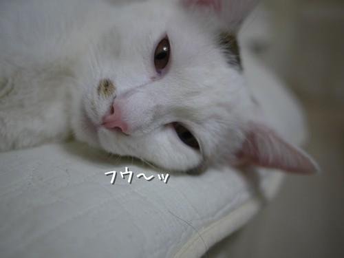 疲れるニャ~