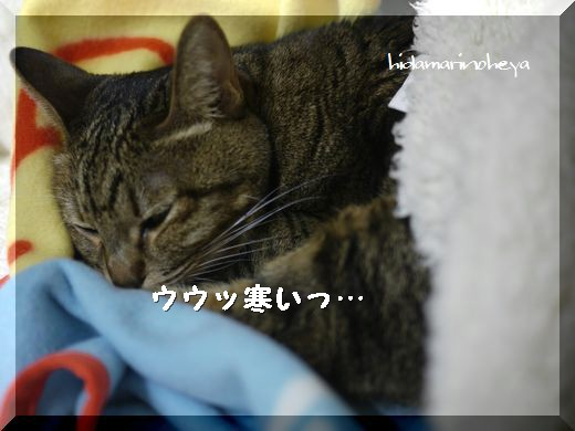 ウウ~寒い1201111946