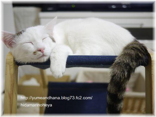 ココハンモック1201282332