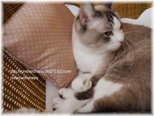 籐の椅子のミルク1201311746