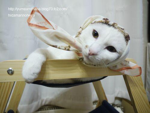 ココスカーフ