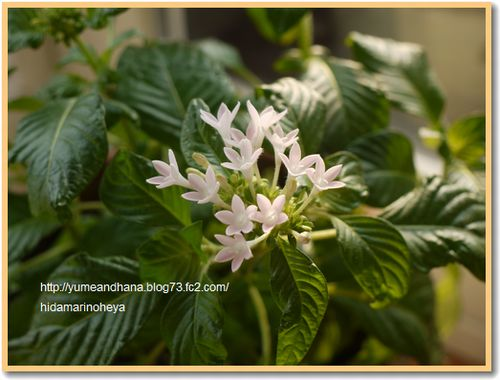 窓辺の花120218