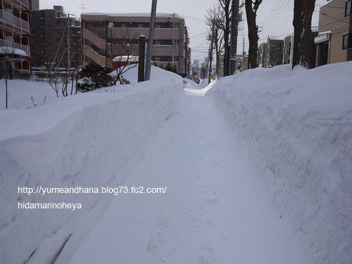 雪山道路120221