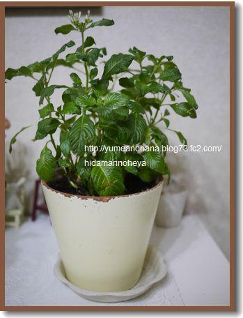 植木鉢120315