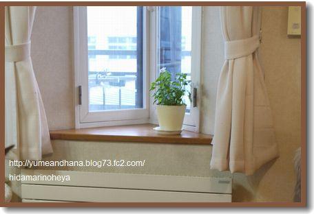 窓辺の植木鉢