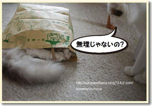 袋ベル1203221