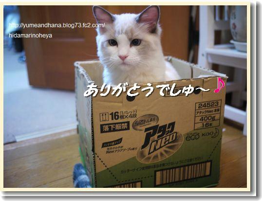 箱ベル120322