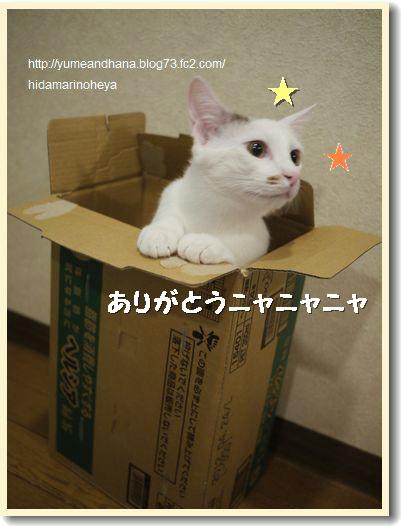 箱ココ1203331