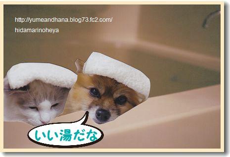 お風呂ゆめ&ベル120324
