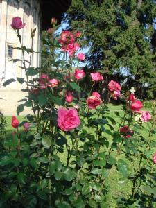 咲き乱れるバラ