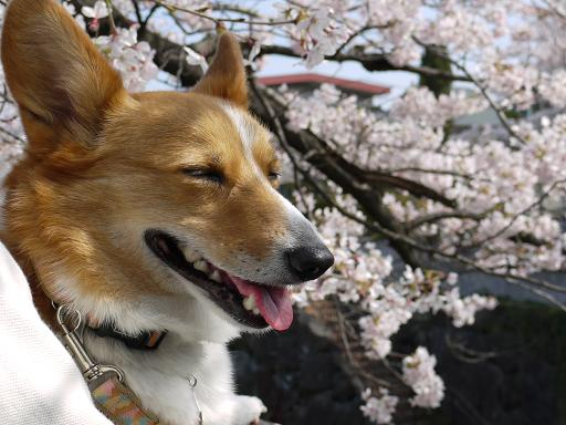 笑う犬4.4