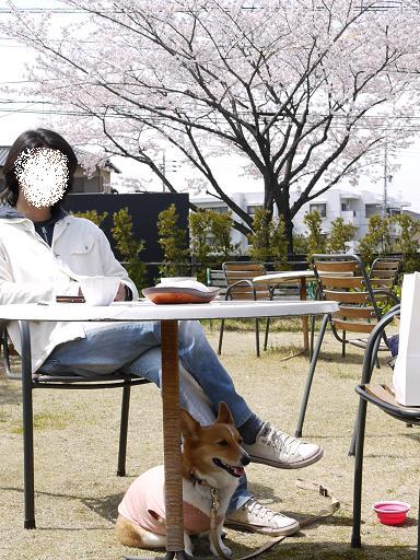 桜を見ながら4.4