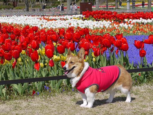 赤い花とプー4.8