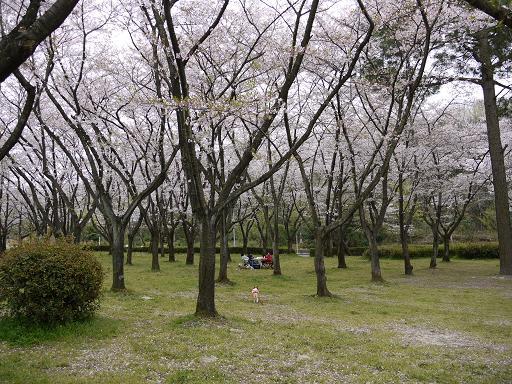 桜林を走る4.9