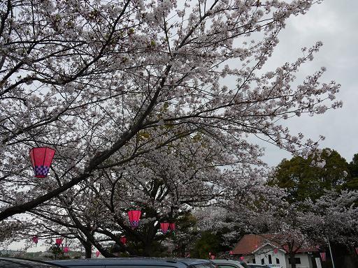 城山公園の桜4.11