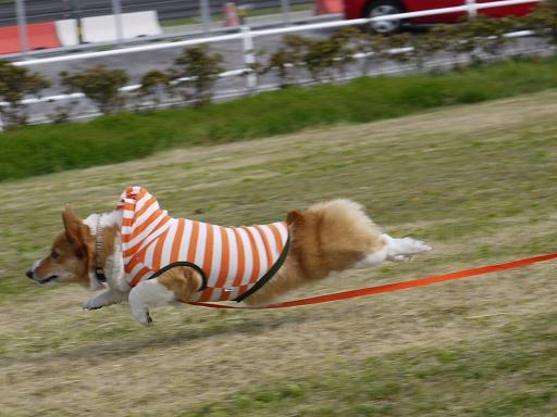 飛行犬②4.18