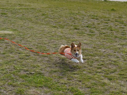飛行犬4.18