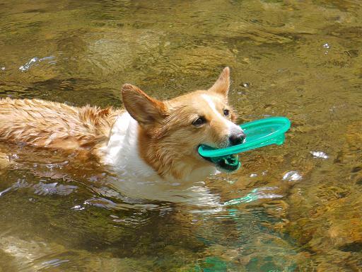 そして泳ぐ