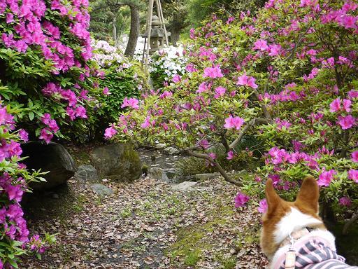 びみょーな咲き具合5.6