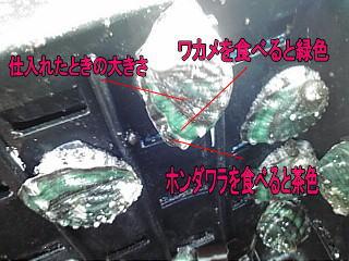 image788.jpg