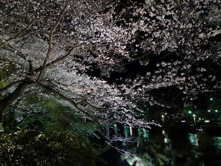 福岡城さくらまつり3