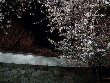 福岡城さくらまつり2
