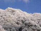 雪景色-01
