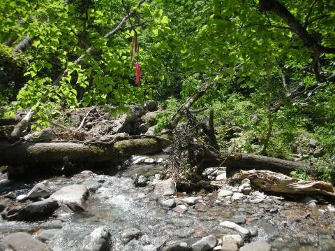 2010年②川又温泉7月18