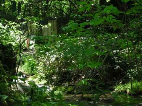 2010年②川又温泉7月30