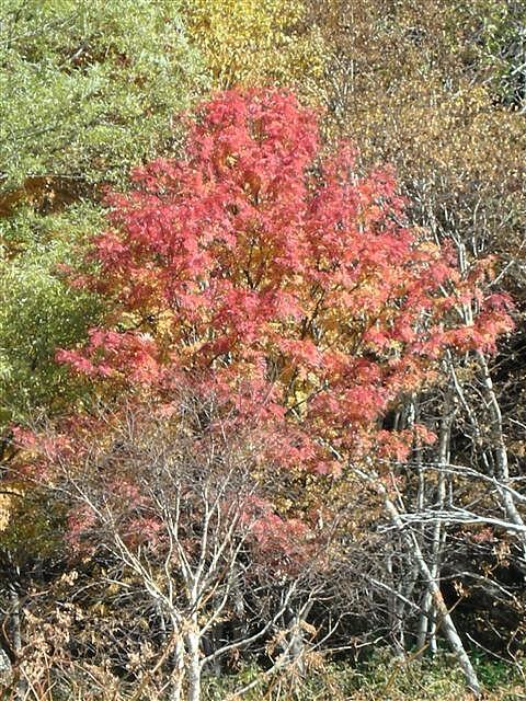 2010年10月 大雪高原温泉8