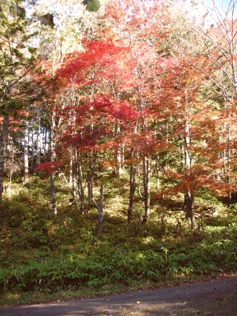 2010年10月10日然別峡テムジンの湯5