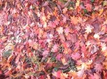 2010年10月11日然別峡オフ会福原山荘縮小②ー1