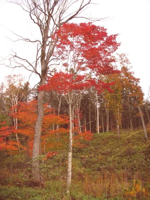 2010年10月11日然別峡オフ会福原山荘5